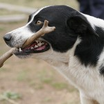 Conference Hound-Up January 25, 2012: More News Than You Can Shake a Stick At