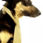 Mock him if you must, but business dog doesn't roll over for anybody.  He's a self-made kibble-ionaire.